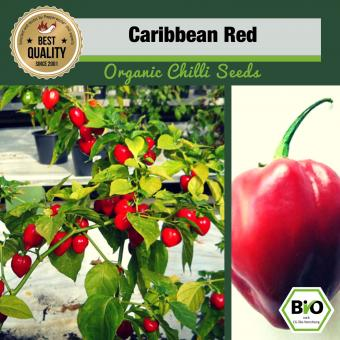 BIO Caribbean Red Chilisamen