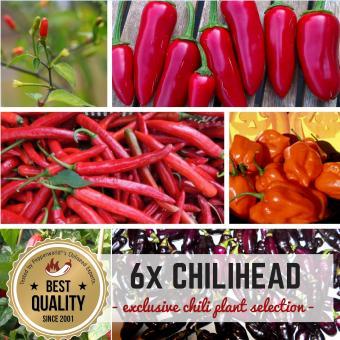 6er Chilihead BIO Pflanzen-Power-Pack