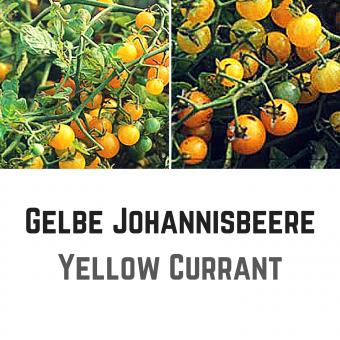 Gelbe Johannisbeere Tomatensamen (Wildtomate)