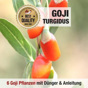 Goji Beeren Pflanze Turgidus 6er Anbauset