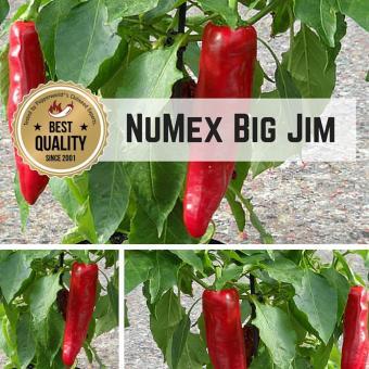 NuMex Big Jim BIO Chilipflanze