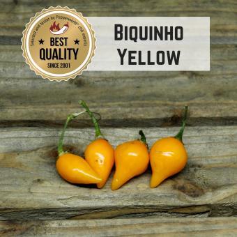 Biquinho Yellow BIO Chilipflanze