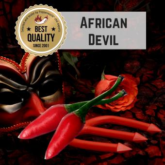 African Devil BIO Chilipflanze