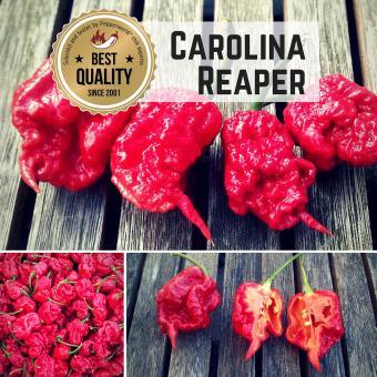 Carolina Reaper Chilisamen