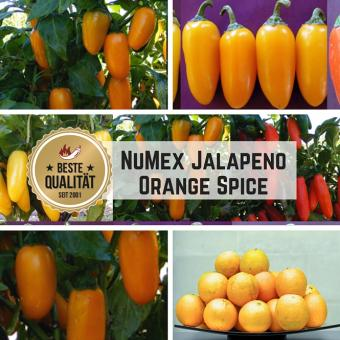 NuMex Jalapeno Orange Spice Chilisamen