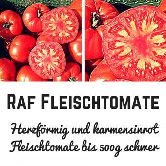 Raf Tomatensamen (Fleischtomate)