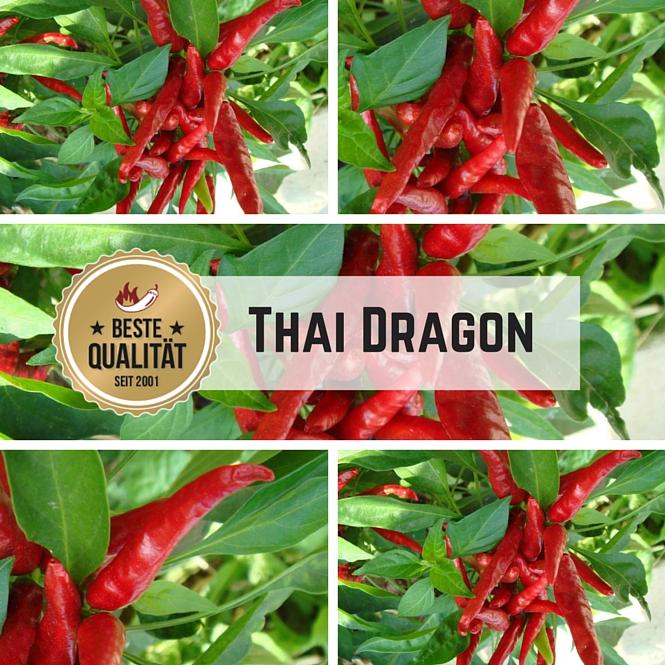Thai Dragon Chilli Seeds