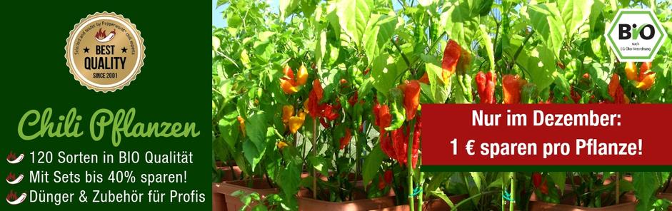 Bio-Chilipflanzen-kaufen-2018