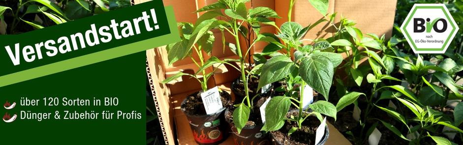 Paprika Bio Pflanzen
