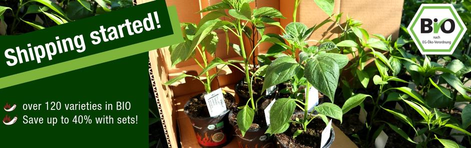 organic pepper plants
