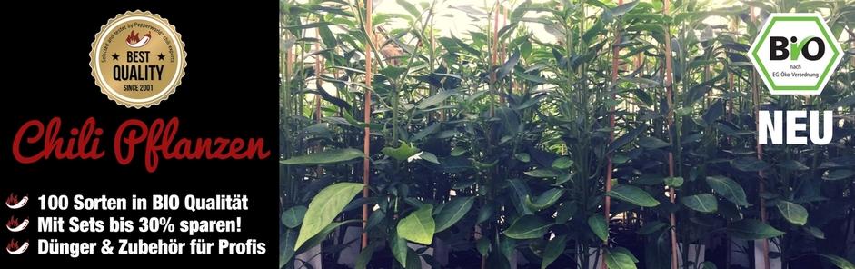 jalapeno pflanzen bio online kaufen. Black Bedroom Furniture Sets. Home Design Ideas