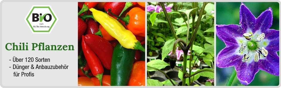 Bio Chili Pflanzen