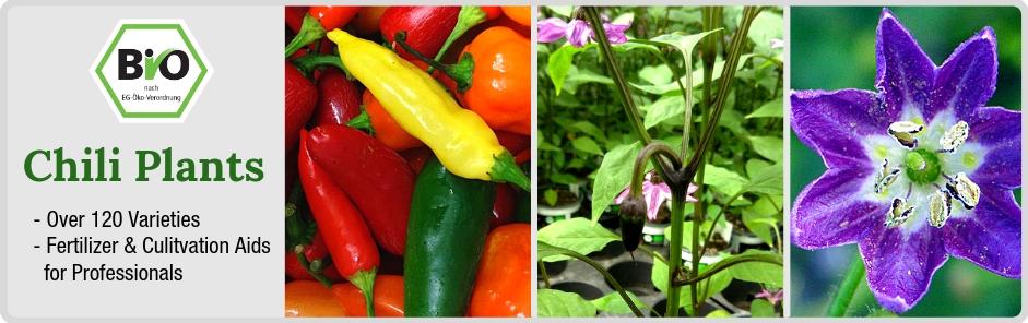 Organic Chili Plants
