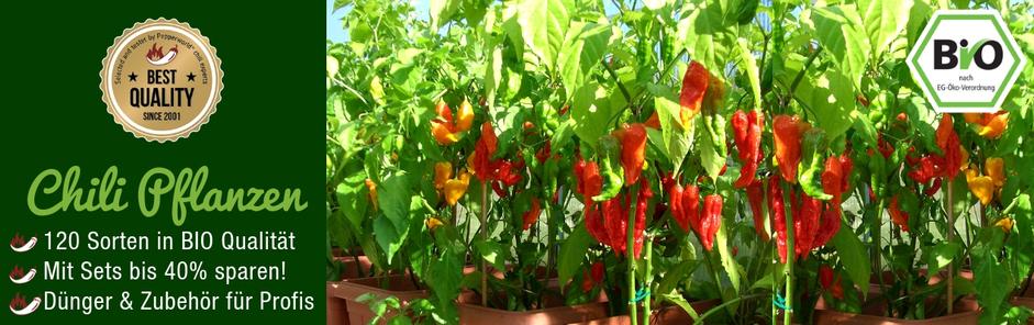 Jetzt Bio Chili Pflanzen Kaufen Uber 120 Sorten Der Chili Shop