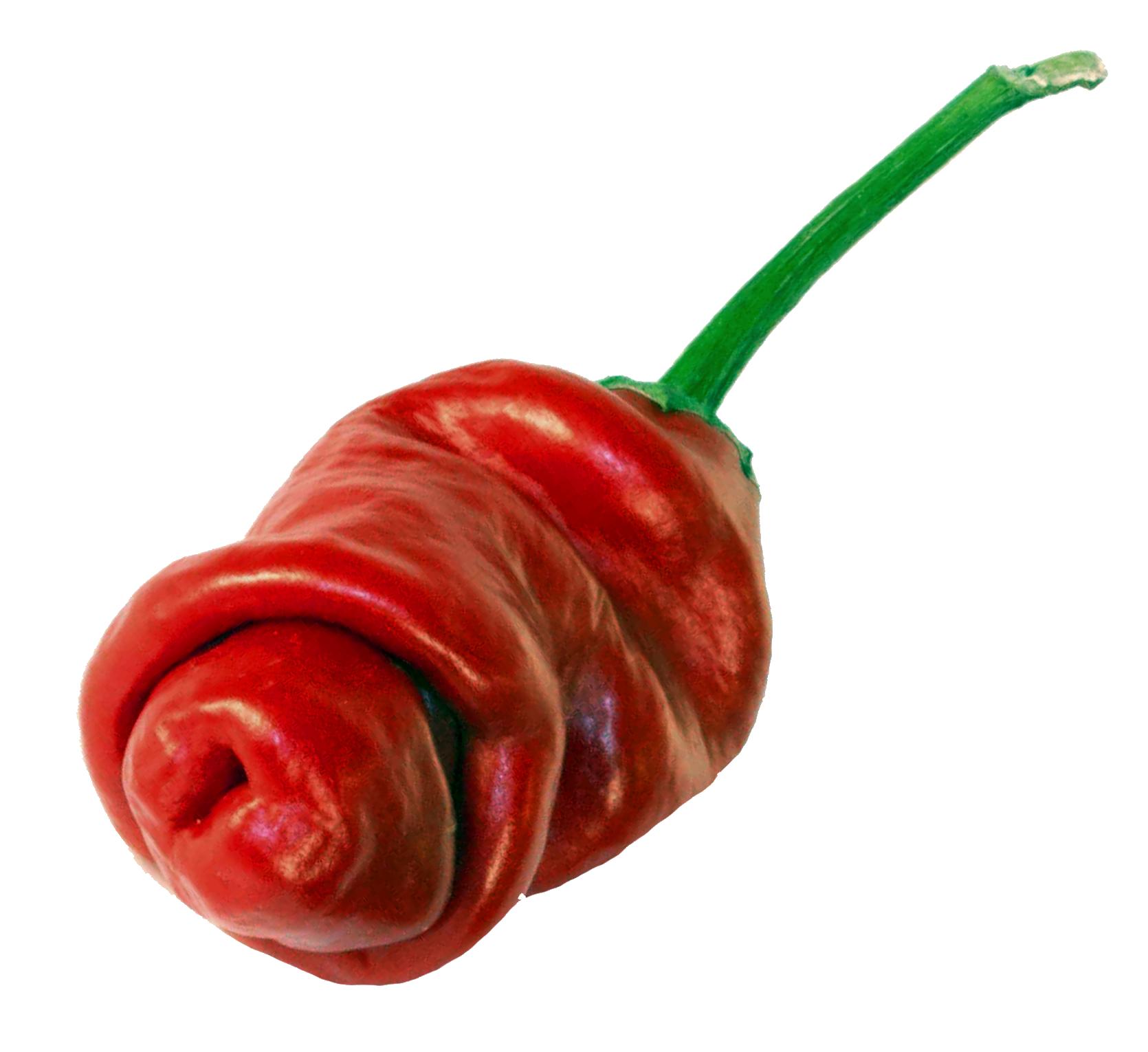 penis chili